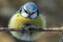 Birds / by Laura Hobbs