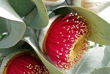 flaura/flowers