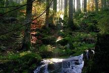 Wunderschöne Natur