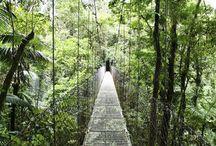 Costa Rica here I come! / by Molly Fessel