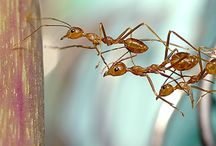 BUSY BUSY ANTS