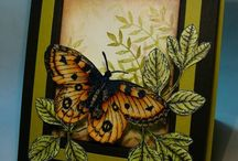 Butterfly Cards / by Louise Morin
