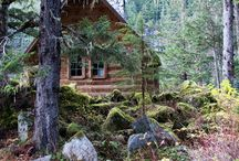 Cabin in the woods - forest landscaping