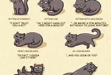 koteły :)