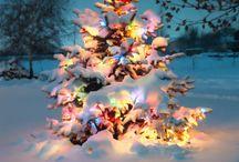 Christmas Scenes
