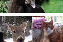 Αστείες φωτογραφίες ζωων