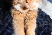 Aminals / My amazing cat, Rufus!