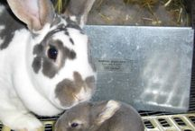 Bunny :) Our pet Rabbits Lillie &Canna & EB.