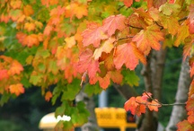 Fall...My favorite / by Kim Pawelski