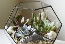 Little glass houses of joy