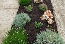 xeriscape / by Jenny Rohrer Albers