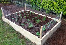 Future Vegetable Garden / ideas for growing own vegetables