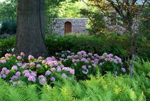 árnyékkert - shade garden