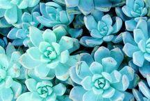 Цветы-:3