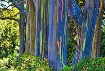 orman ağaç