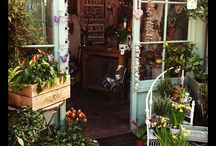 flowers / I could shop here every day!! / by Ginger Davies