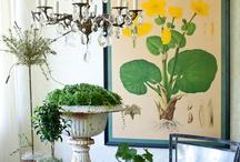 botanicals / by angieangeline