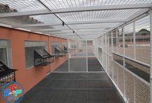 pigeon loft # brieftauben haus # merpati pos