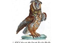 Ornithology Owl, 1778 / postcards