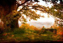 Autumn (4) / by Beverly Lett