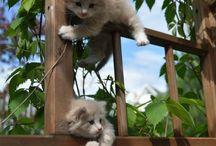 cats-kitten