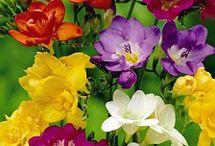 flowers (cicekler)