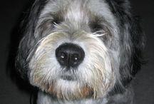Miss my dog / Polish Lowland Sheepdog