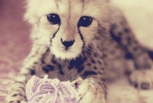 love animal =]