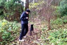 dog training g