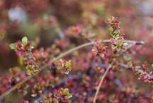 Flowers / by Alena Krivoruchko