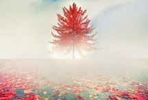 4 SEASONS / Born into spring to be nourished by summer rains and grow into autumn that absolutely absorbing and colorful season of life. While, in the wings, winter with all its wonder awaits...