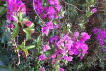 Flores de mi jardín / Las flores de mi patio