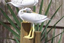 Pic birds