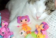Mirtilla, Giulio ... and the cats