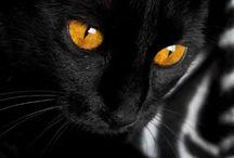 Cat's/Koty