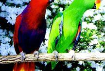 Linnut