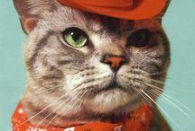 Cat Fancy