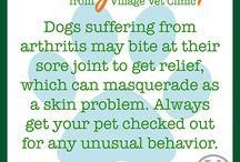 Healthy Pet Tips