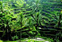 Ubud Bali / Desa Ubud Bali yang mempesona, Wonderfull island in small World