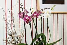 Orchidea tartáshoz tanácsok