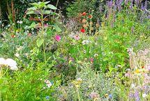 The Secret Garden / by Isabelle Modigell