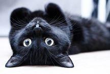 Phoebe/zwarte kat
