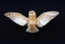 Owls / by buttercup caren