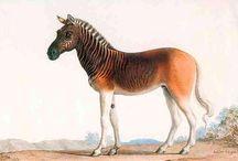 cousin cheval