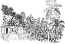 atlas_paysage_martinique_follea