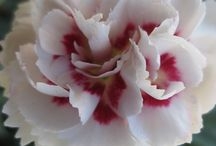 Flowers sort