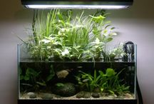Planted Aquariums / by Desiree Frye