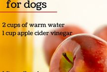 HOMEMADE help for dog allergies and Diseases