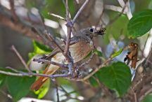 Vtáčatá / Birds