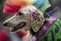 Crazy Creative Pet Grooming / by Ann MK
